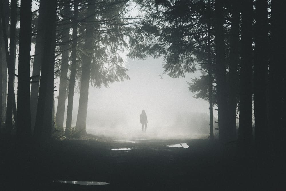 Jess, Fog. Photo by Brendon Burton.