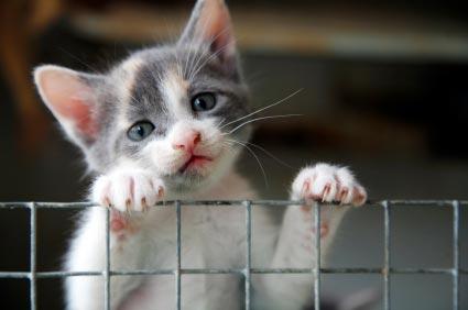 Adopt-a-Cat-or-Kitten
