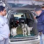 http://onpasture.com/2013/05/20/vermont-goat-collaborative-meats-new-american-needs/#!prettyPhoto