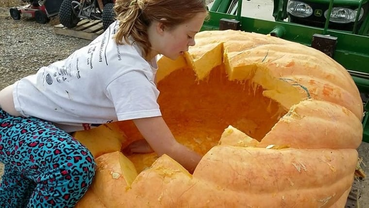 Picking the seeds from the guts of a monster...pumpkin.