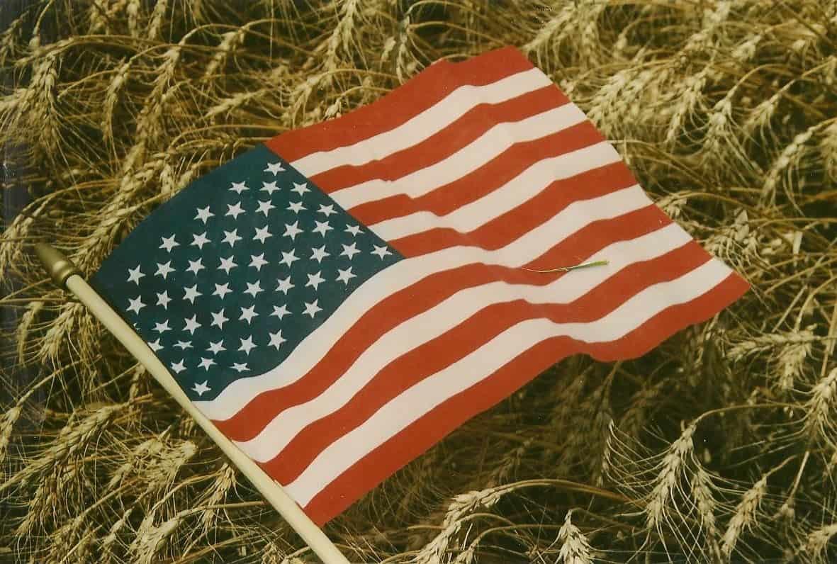 flag wheat photo 001