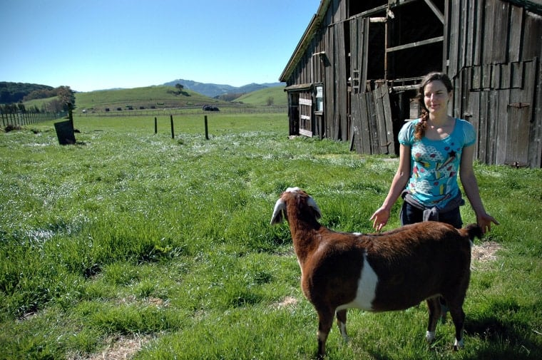 Alissa Donovan, Utah, establishes a rapport with her animals to keep it all very low stress.