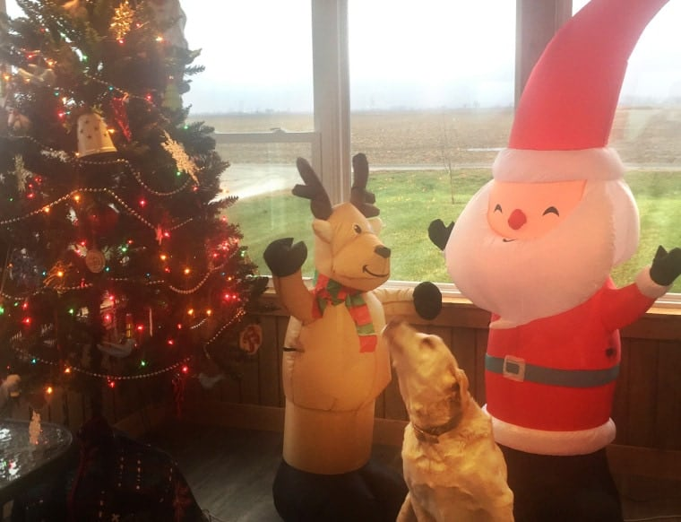 The author's dog,Claus the Christmas puppy, and his friends.