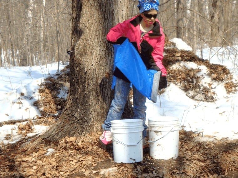 For many small producers, gathering sap is a task family and friends enjoy helping with.