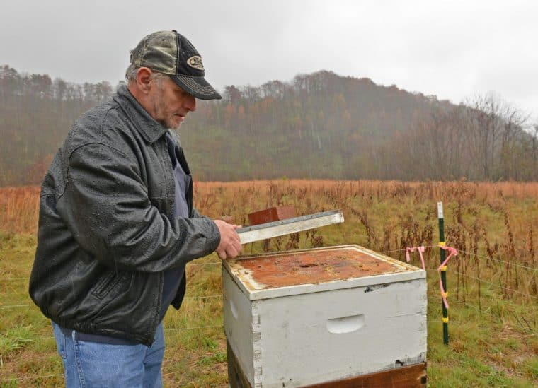 Wade Stiltner, West Virginia Department of Agriculture apiary inspector, runs a pilot program of bee hives for honey production on a reclaimed mine in Hernshaw, West Virginia. Photo by Tyler Evert/ Associated Press
