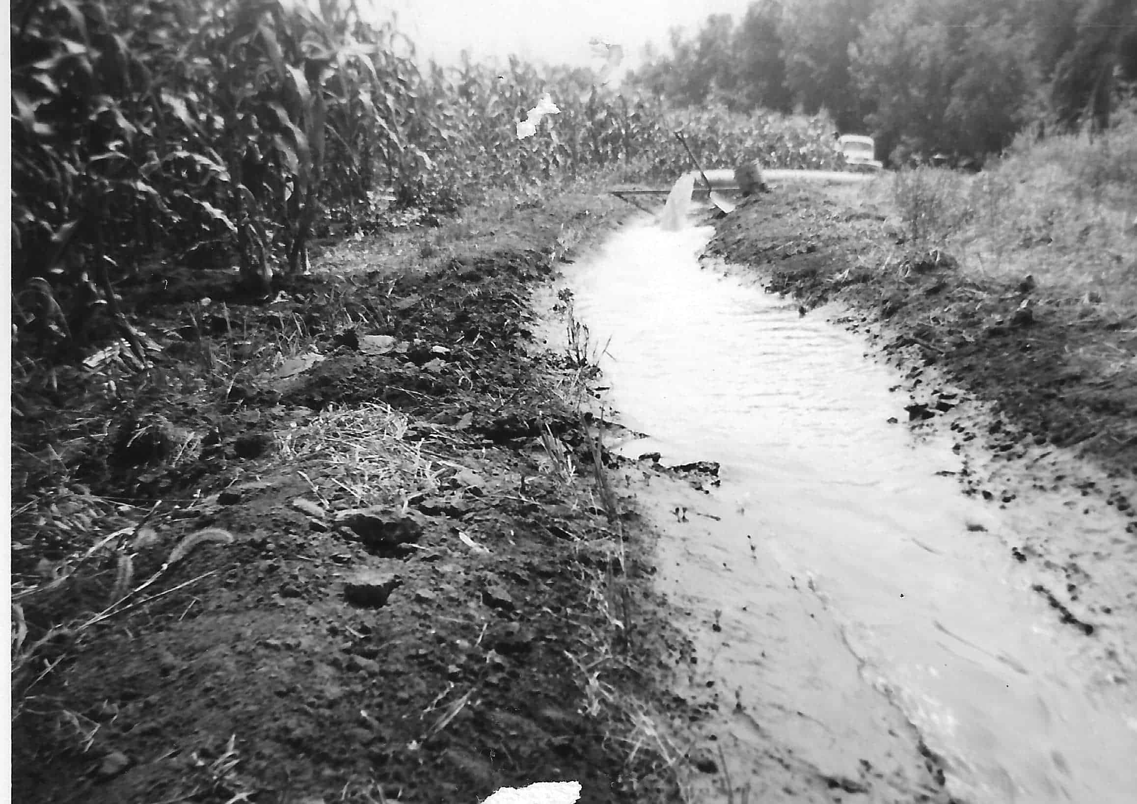 grayscale irrigation
