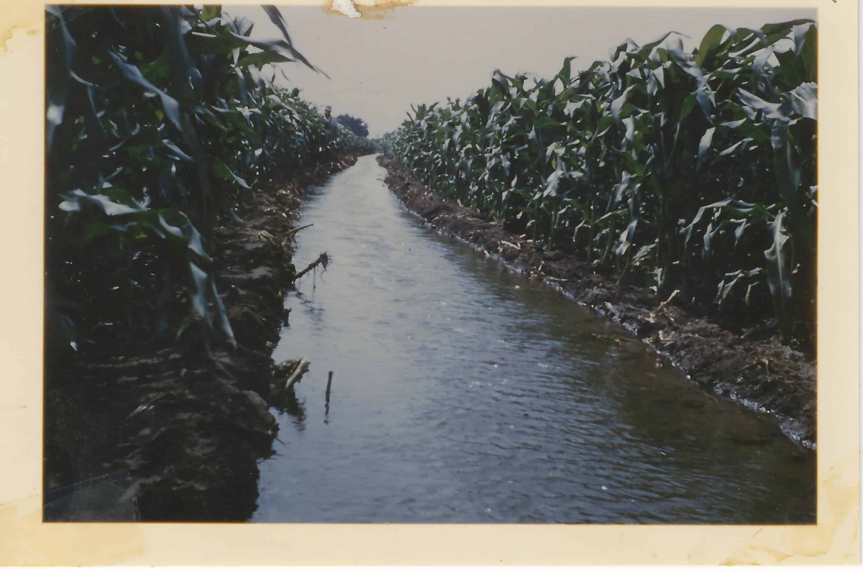 In the mid-1950s, Oswald's father, Ralph, dug a ditch to route ground water to irrigate his corn field.  It's not the first time an American took an innovative approach to raising corn. (Photo provided by Richard Oswald)