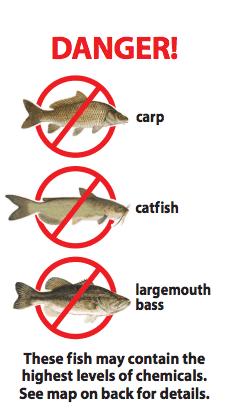 Fish_Danger