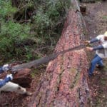 A crew of the Siskiyou Mountain Club in southern Oregon uses a crosscut saw to remove a tree blocking a back-country trail on public land. The crews frequently work in federal wilderness areas, which place restrictions on the use of motorized equipment like chain saws.