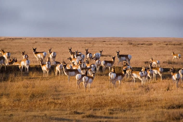 Courtesy of American Prairie Reserve