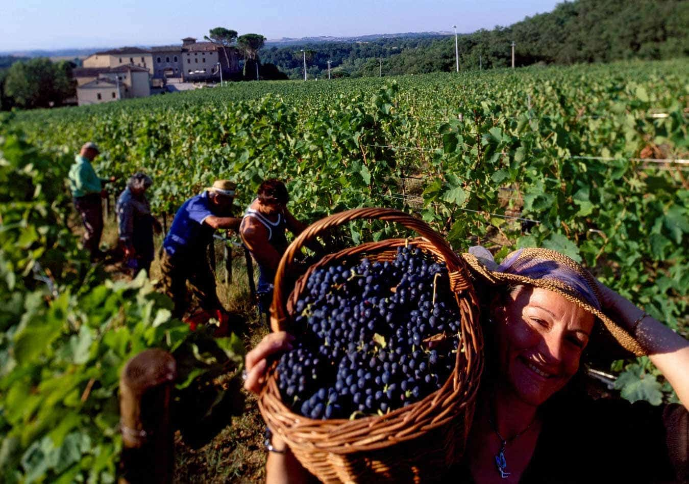 castel-monastero-vineyards11