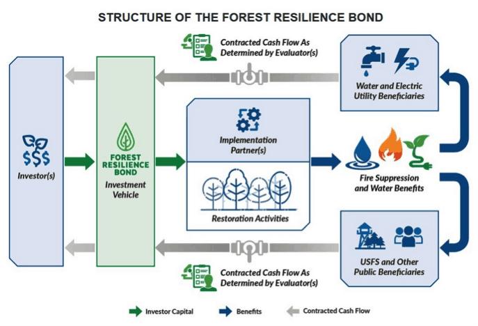 forest_bonds_graphic