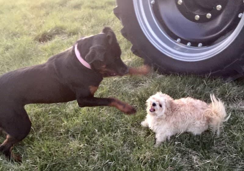 richard_dogs_crop