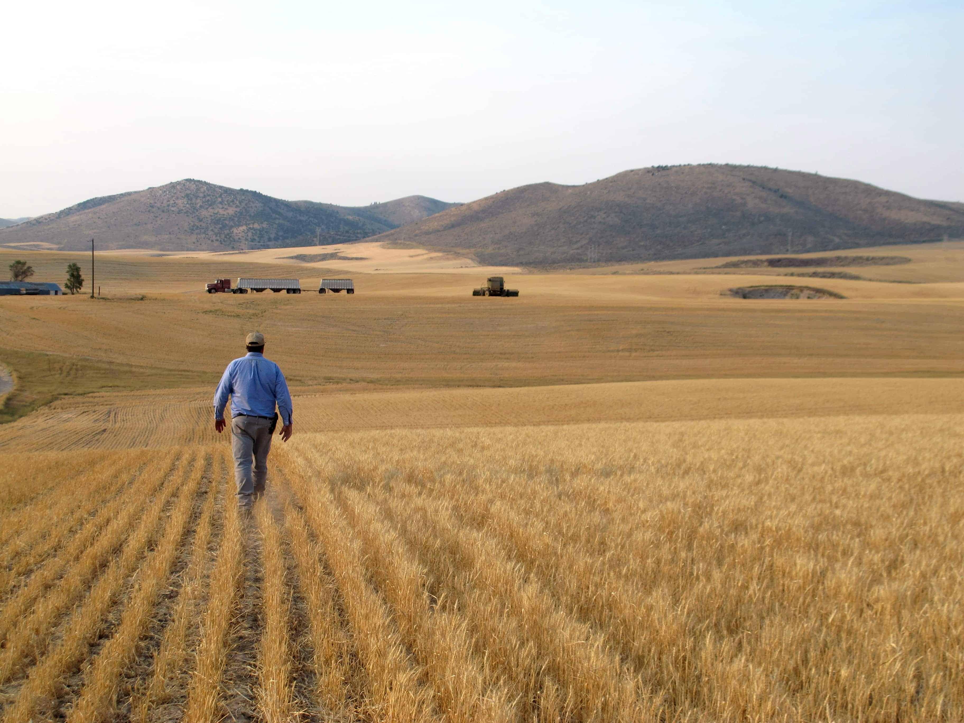 Hans-Hayden-droughted-field