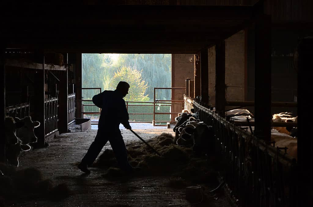 's_silhouette,_moving_hay (1)