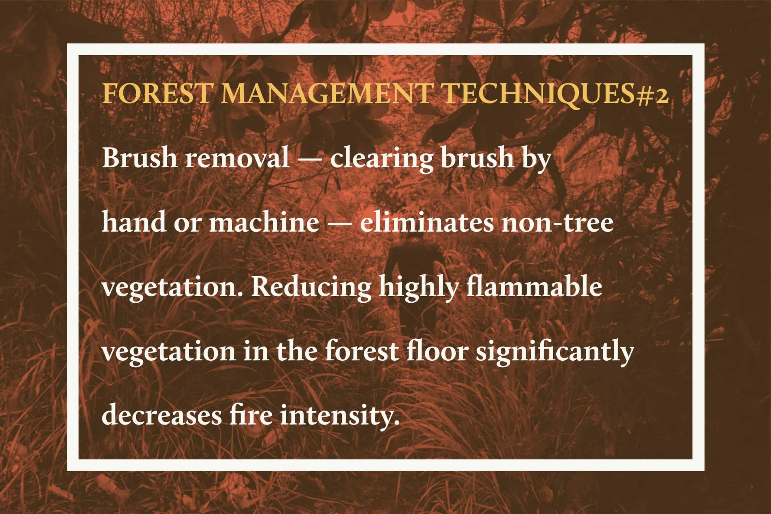 Forest Management Techniques 2 (1)
