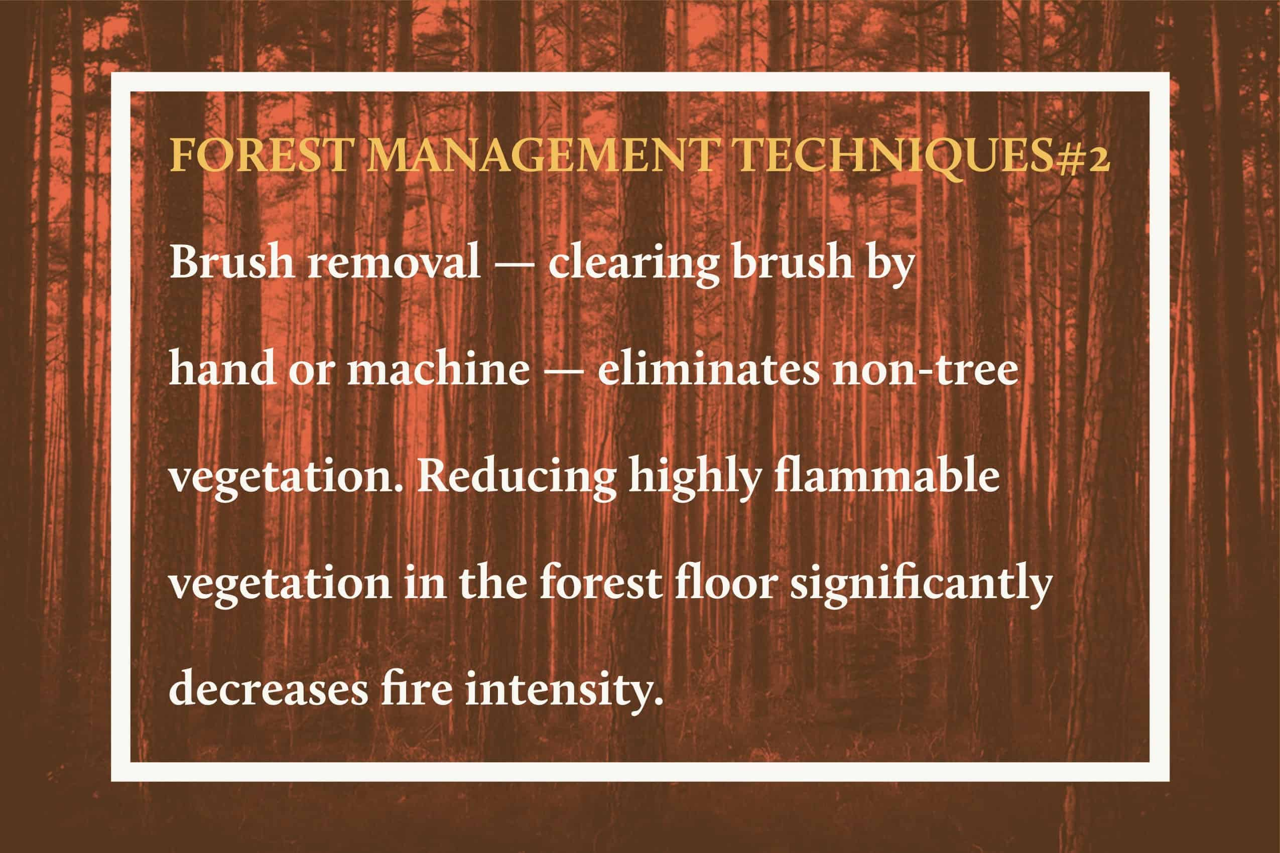 Forest Management Techniques 2