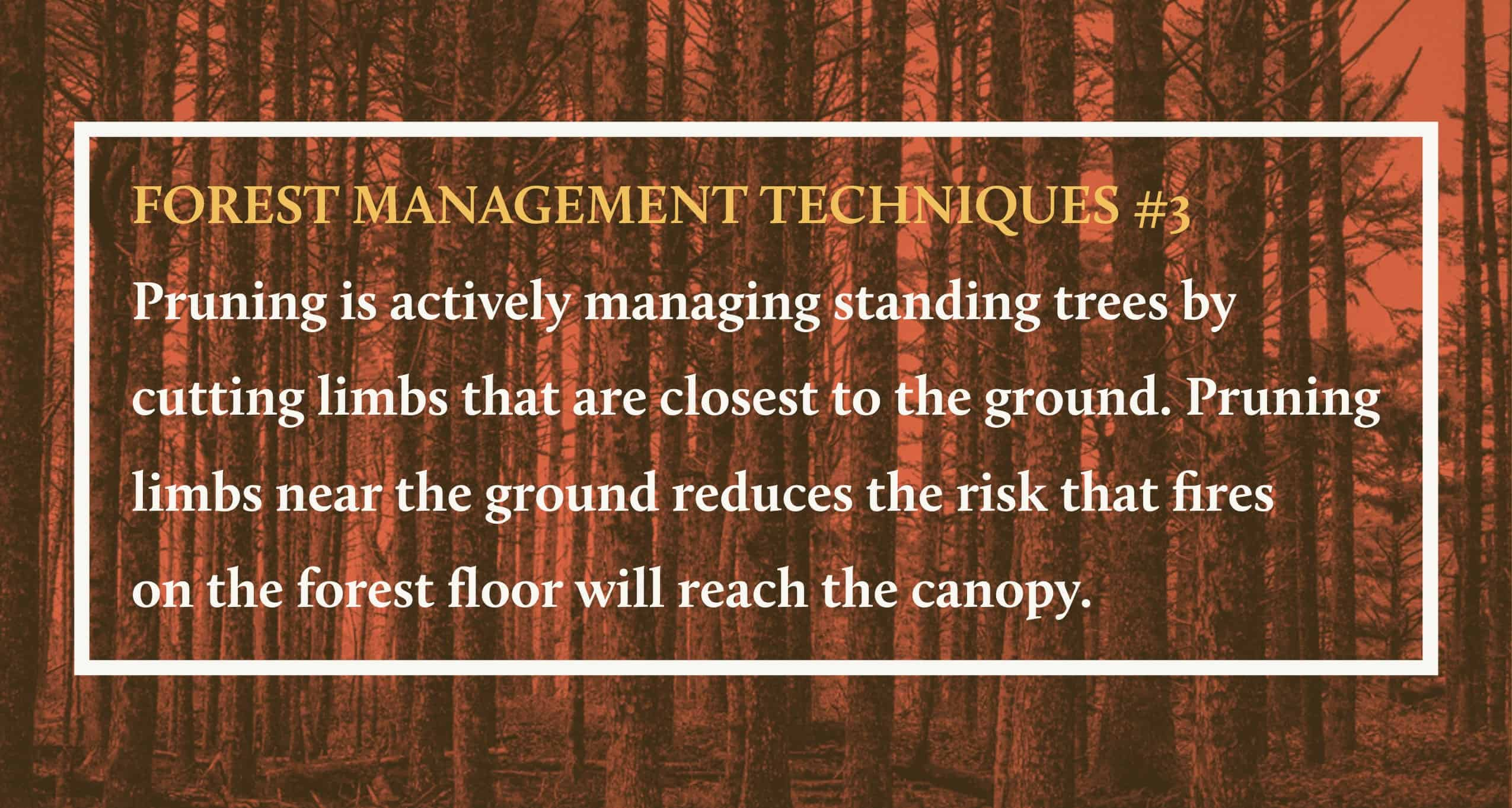 Forest Management Techniques 3 (2)