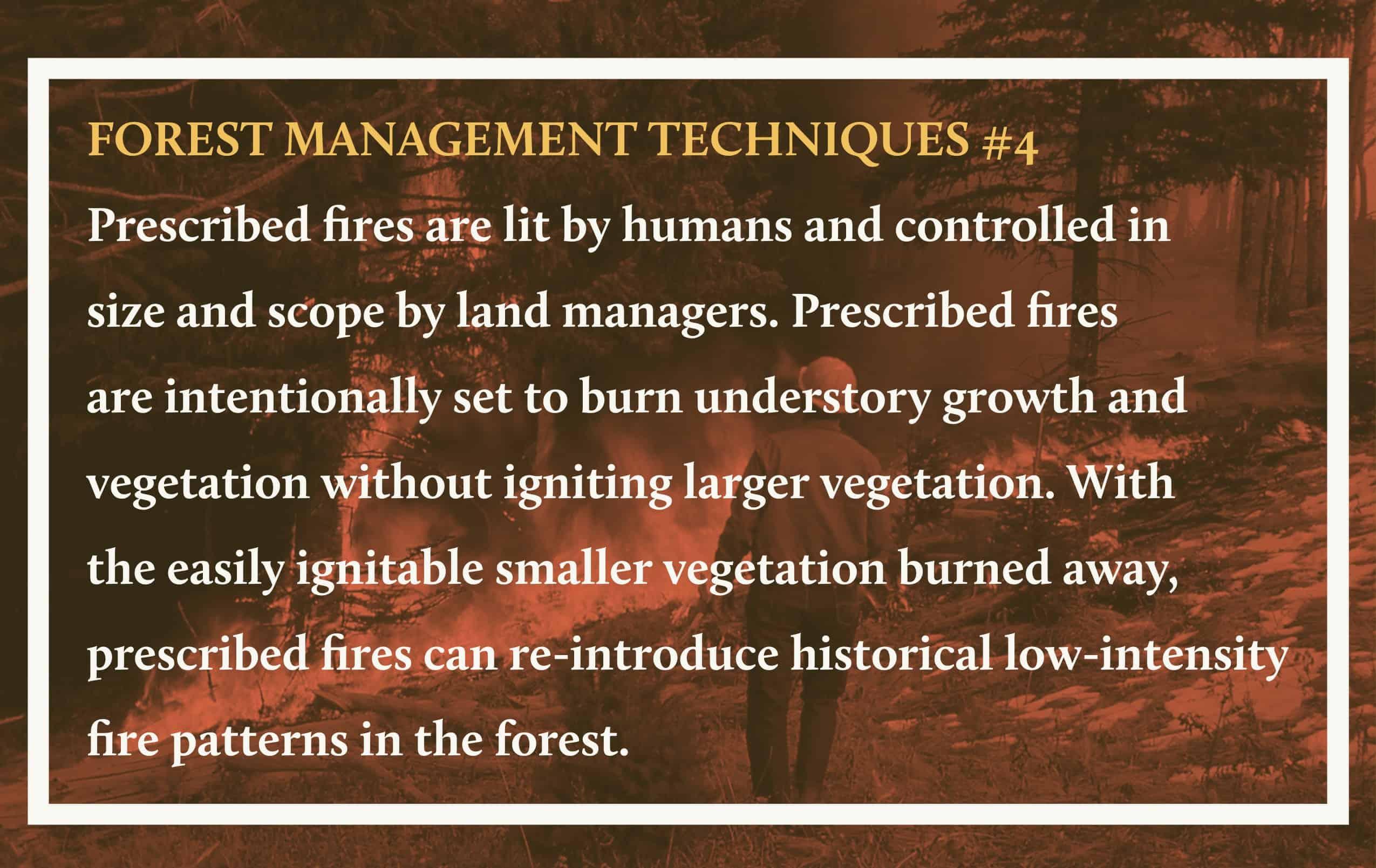Forest Management Techniques 4 (1)