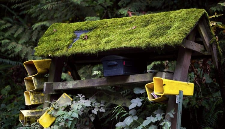 Green Moss Covered Mailboxes Outdoors, Copy Space