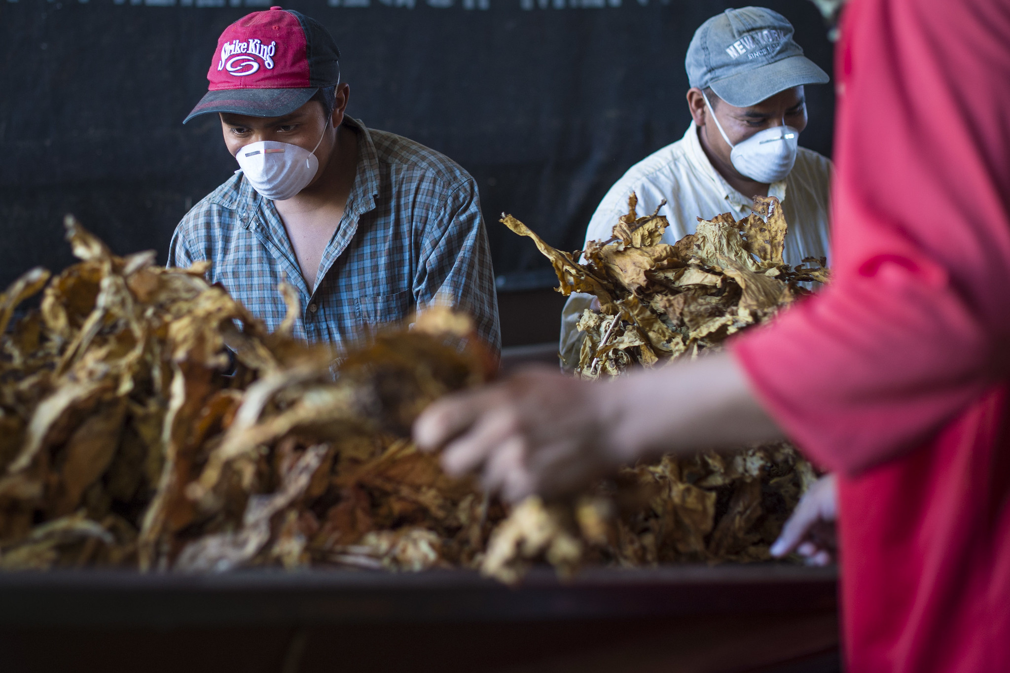 Southern Farmers Reckon with Push to Raise Tobacco-Buying Age