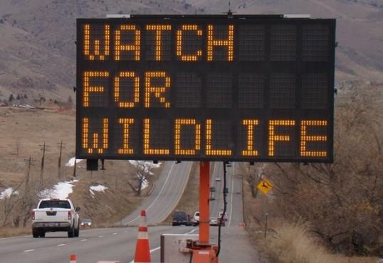 WatchForWildlife2.jpg