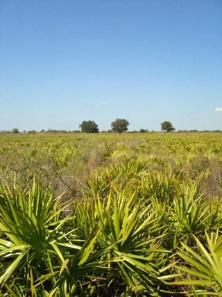 palmetto-prairie320.jpg