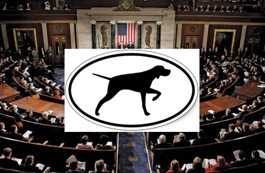 us-senate-birddog530.jpg