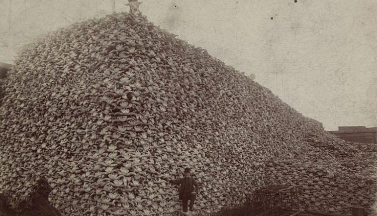 767px-Bison_skull_pile