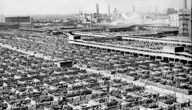 Livestock_chicago_1947