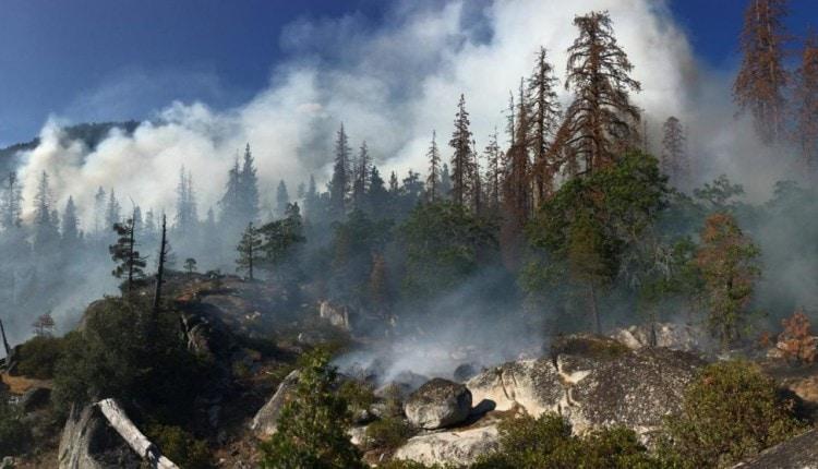 Butte_Fire_Tree_Mortality_27144724009-1600×557