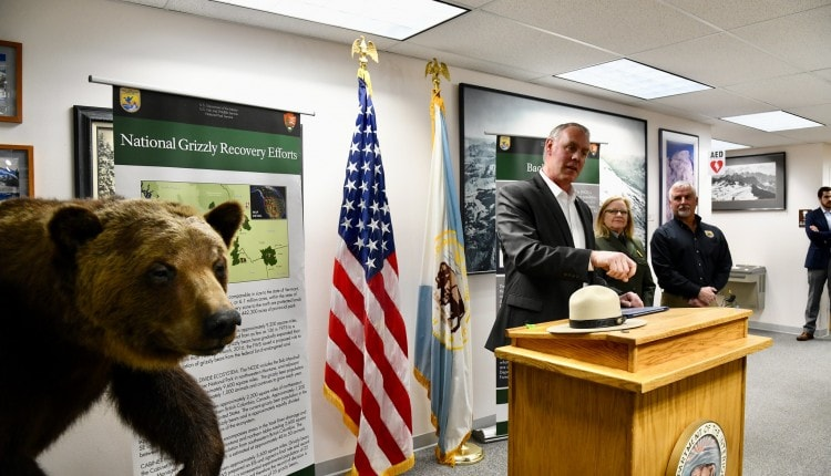 grizzly bear reintroduction announcement