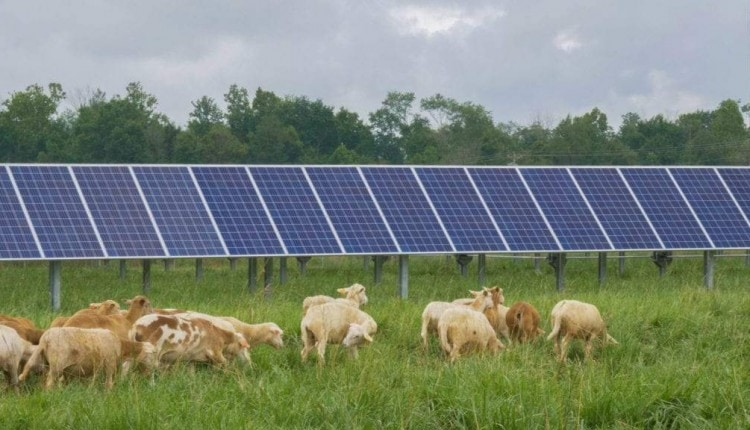 solarsheepphoto-credit-ben-turner-hoosier-energy-1-1024×576