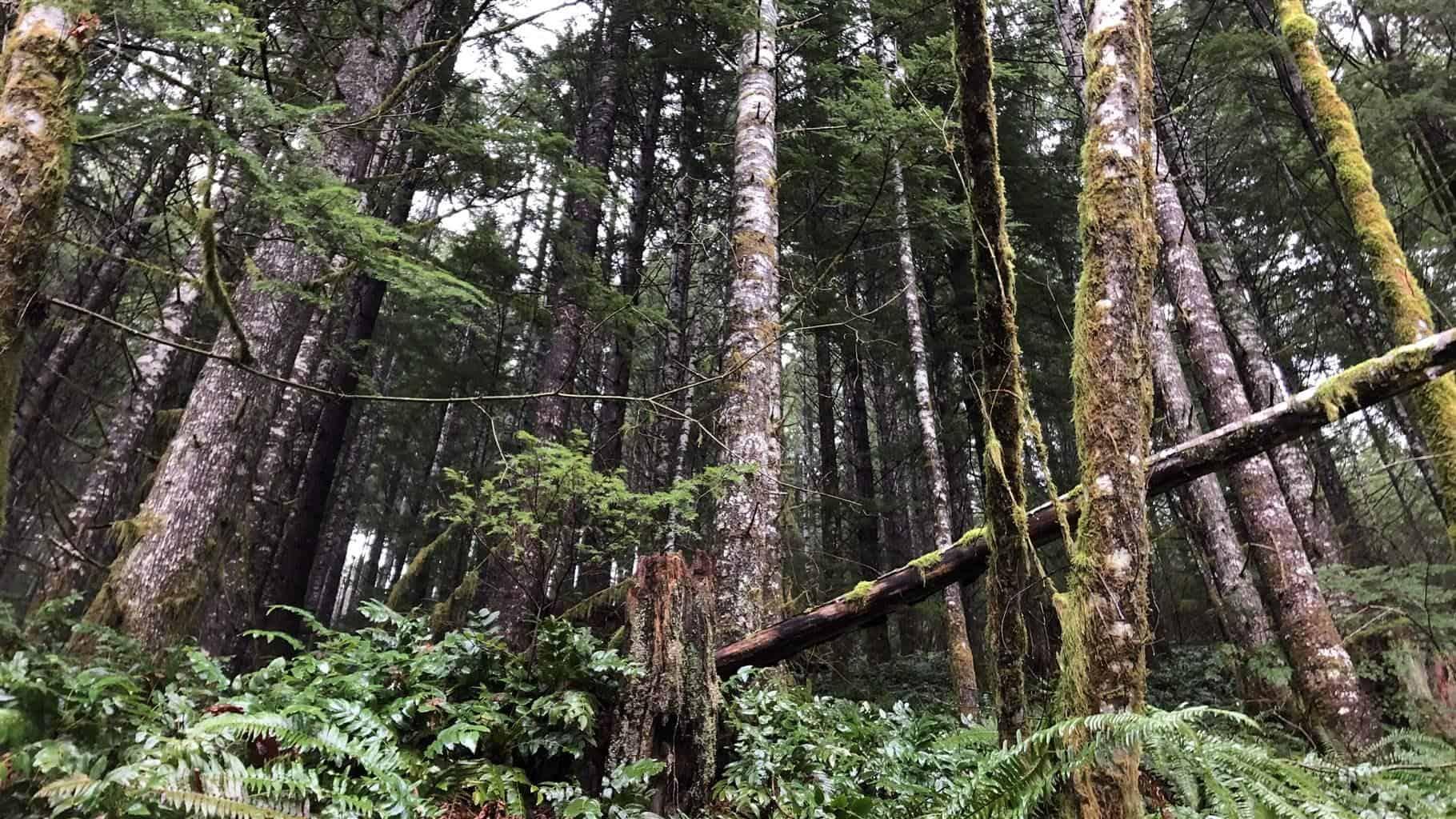 Forest Land near Washington's Merrill Lake